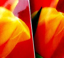 Tulip cups. I by Bluesrose