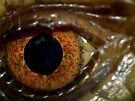 Eye Closeup - Blue-tongue Lizard by kutayk