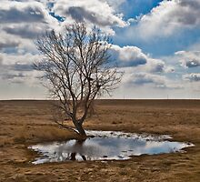 Little Tree on the Prairie by Bryan D. Spellman