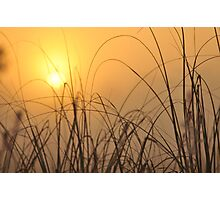 Everglades Sunrise, As Is Photographic Print
