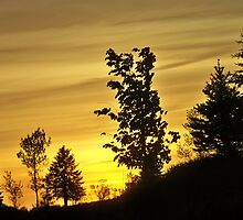 Evening glow ~ Trees on the Hill by kodakcameragirl