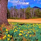 SPRING, CADES COVE by Chuck Wickham