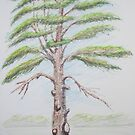 Sketch of a Tree by Geraldine M Leahy