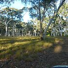 Tourist Rd Southern Highlands by dogwalker