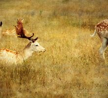 In Golden Grass by Lynda Heins