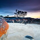 Binalong Bay by John Dekker