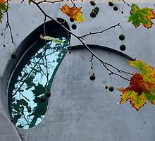 Autumnal reflections by su2anne