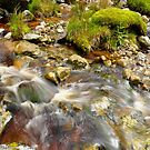 Wicklow Stream by Finbarr Reilly
