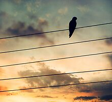 Bird on a wire by Swirley