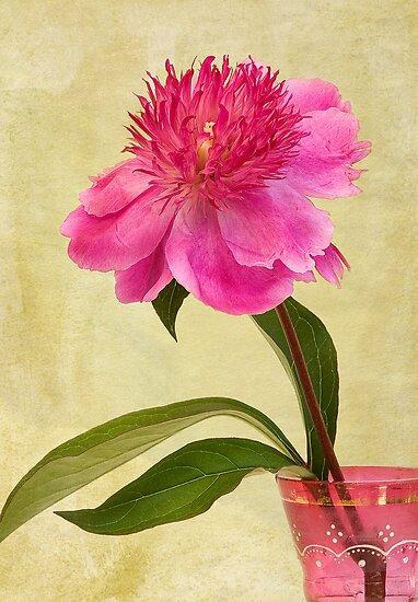 Peony in Pink Vase by Leslie Nicole