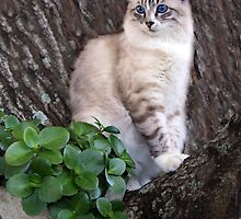 Janie in a tree again! by ambermay