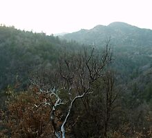 Late December Afternoon In The San Bernardino Mountains by Bearie23
