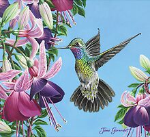 Hummingbird and Fuchsias by Jane Girardot