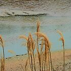 Wild Grasses at the River's Edge by Lenore Senior