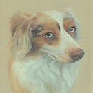 &quot;Callow&quot;, red merle Australian Shepherd by Pam Humbargar