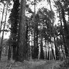 Dark Forest Wicklow Mountains Ireland by DannyWalsh