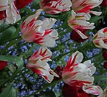 Red, White and Blooming by E.R. Bazor