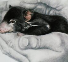 In His Hands - Baby Tassie Devil by Marilyn Harris