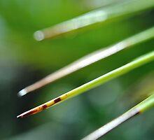 The Sharpest Blade by laruecherie