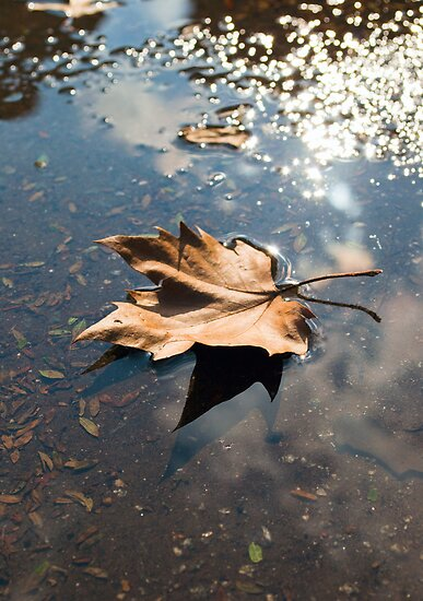 Leaf No Ripples by Shaun Colin Bell