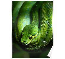 Green Tree Snake Poster