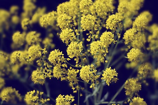 Vintage Wildflowers - Hazy summers day by kipstar