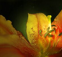 THE LILY OF HOPE AND LIGHT by leonie7