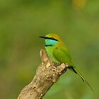 Little Green Bee-eater by DIZZYHEIGHTS