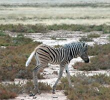 Zebra – crossing by Rina Greeff