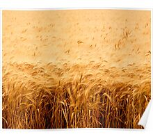 California Wheat Field Poster