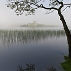 Misty morning, Loch Awe by Gary Eason