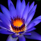 Lotus Flower Art 2 by idesignstuff