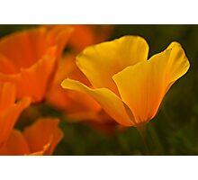 Vibrant Photographic Print