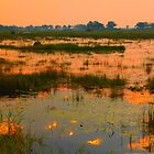 in the Okavango Delta, Botswana by supergold