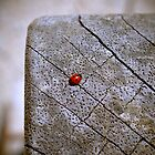 Ladybug by MittyDesques