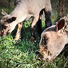 Moutons by MittyDesques