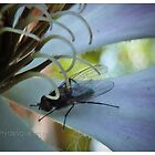 Mouche by MittyDesques