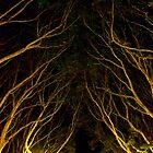 Hyde Park by bouche