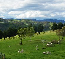 Springtime Kanimbla Valley NSW by Alison Murphy