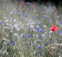 Summertime blues by Jennifer Bradford