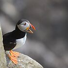 Puffin on a ledge, Saltee Island, County Wexford, Ireland by Andrew Jones