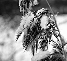Winter wonderland by EblePhilippe