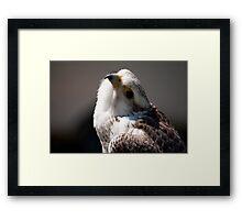 Birds of Prey Series No 3 Framed Print
