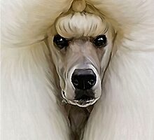 Standard Poodle ... by Cazzie Cathcart
