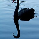 Black Swan at Hyde Park, Northbridge W.A. by Sandra Chung