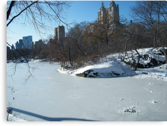 NY February Central Park, Snow View by lenspiro