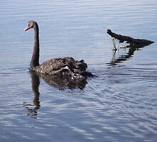 Look out Croc - Reserve Claremont Tasmania Australia by Leoni Williams