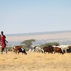 Maasai (or Masai) Herder with Cattle, Tanzania  by Carole-Anne