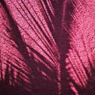 palm shadow on pink  by richard  webb