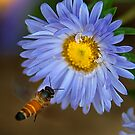 Honey Bee-2/2011 by Mukesh Srivastava